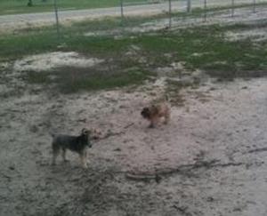 cooper dog park