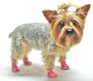 cute dog wearing sandals