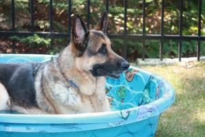 Dillon enjoying the kiddie pool