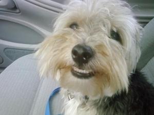 cooper smiling dog