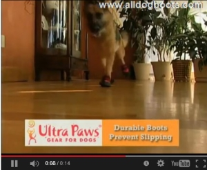 ultra paws help slipping dogs