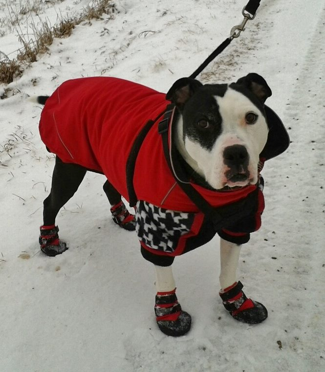ultra paws for winter