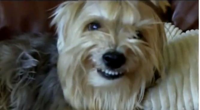cooper smiling