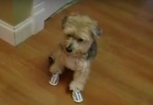 cooper wears summer dog booties
