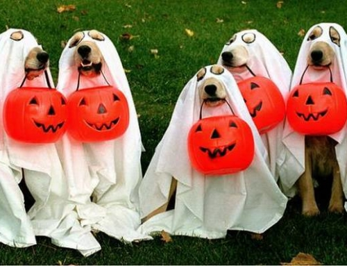 5 Quick Halloween Costume Ideas for Dogs