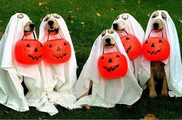 dog ghosts halloween