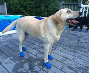 dog-water-boots (1)