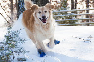 happy-dog-wearing-snow-boots