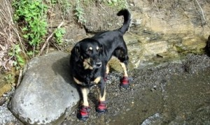 hiking-dog-boots (1)