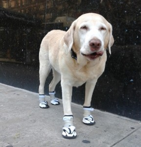 orthopedic-dog-boots (1)