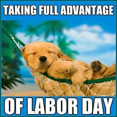 labor day dog