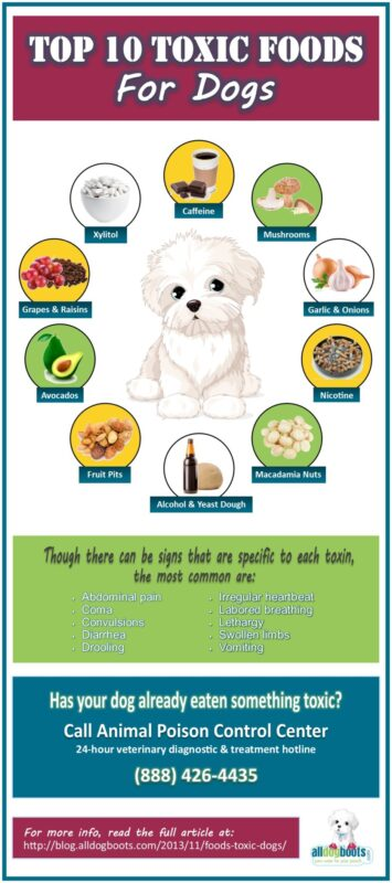 Complete List Of Toxic Foods For Dogs