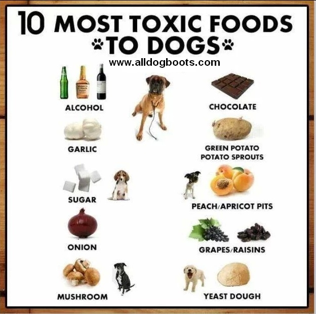 Most Poisonous Food For Dogs