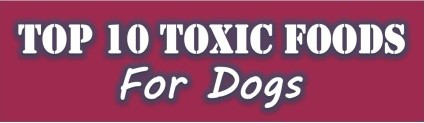 toxic dog foods