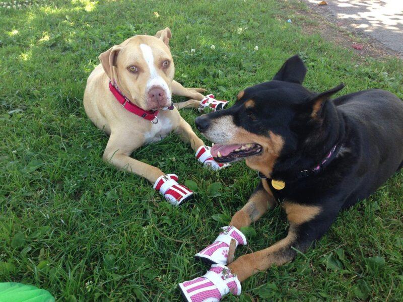 bella and tina spring dog shoes