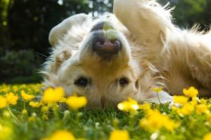 Dog enjoying Spring