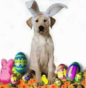 Easter Dog