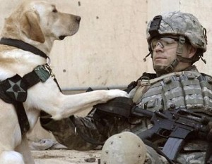 US War Dogs