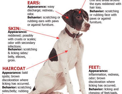 If Your Dog Is Itchy This Spring, He May Be Suffering From Seasonal Allergies