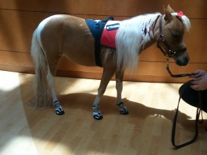 hope miniature service horse