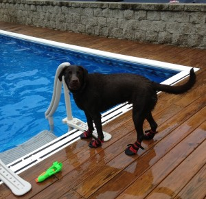 lab wears pool boots