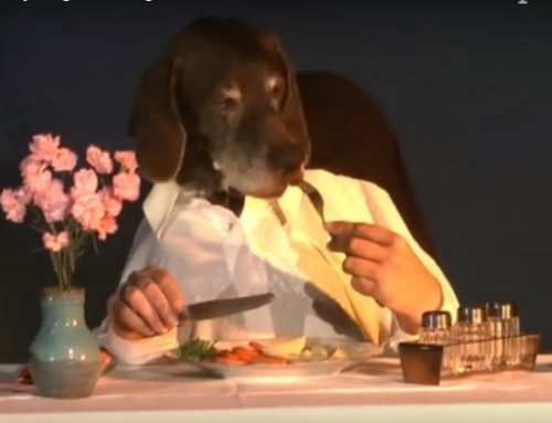 Dog Dines Elegantly Alone – So Funny, Must See!