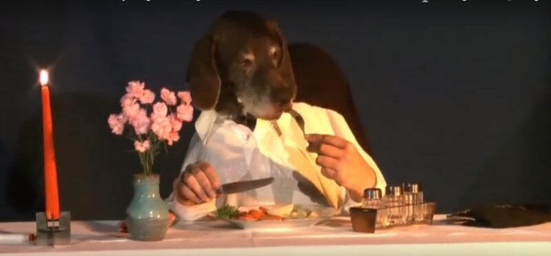 dog dines elegantly alone