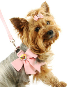 fancy dog harness and collar