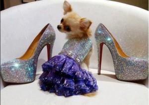 dog fashion bling
