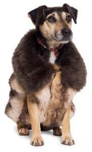 dog fur winter jacket