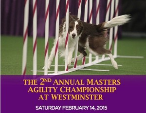 westminster agility competition