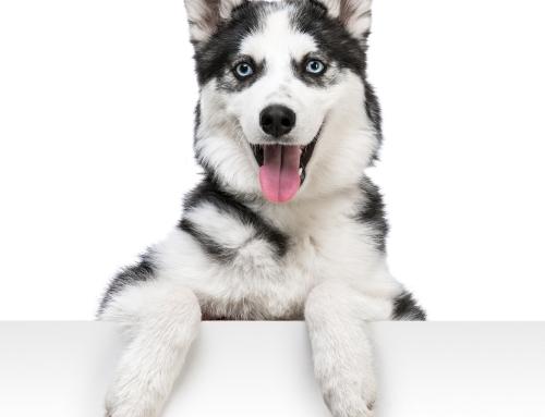 Bassett Hound Dog Breed Bio From Alldogboots