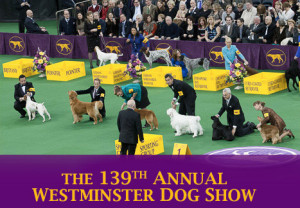 westminster dog show 2015