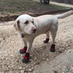 dog booties for mud