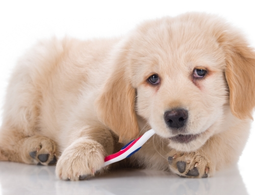 The Importance of Dental Care for Dogs