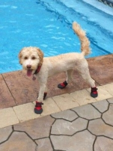 darby-swim-shoes-e1402763229513-compressed