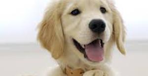 dog-nice