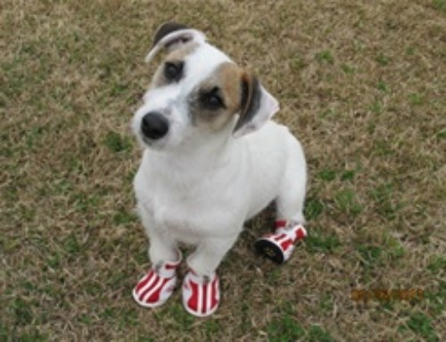 Top 5 Best Dog Booties for Summer
