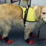 service dog booties
