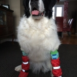 Newfoundland Boots