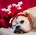 holiday stress for pets