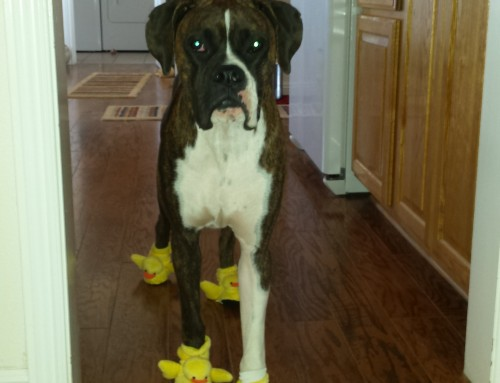 New Ducky Dog Slippers