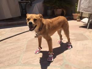 Ranger-standing-in-booties