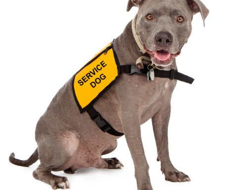 Service Dogs  – What Makes Them Unique & Special