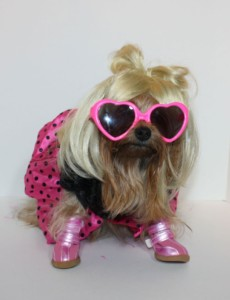 dog dressed as lady gaga