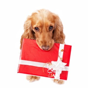 dog holding christmas preset