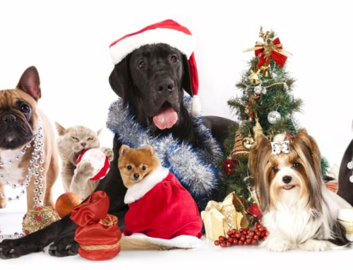 Celebrating the Holidays with Pets