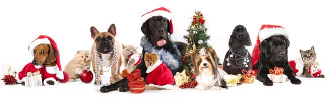 dogs-cats-celebrating-christmas-new