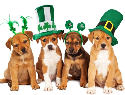 St. Patrick's Day with Your Dog – Any Issues?