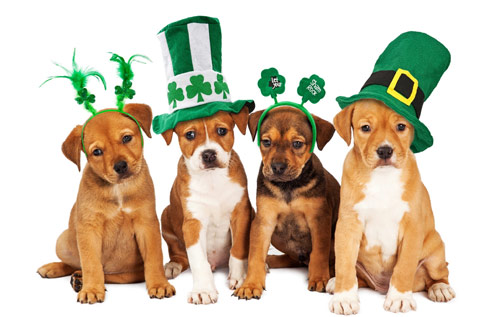 st-patty-dog-new